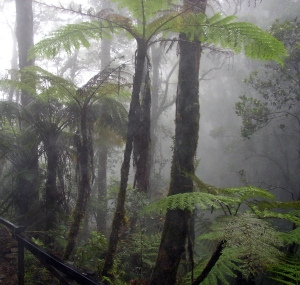Cloud_forest_mount_kinabalu
